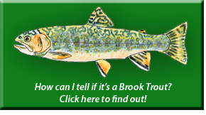 Brook Trout Identification