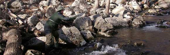 Fisherman on small stream
