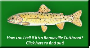 Bonneville Cutthroat Identification