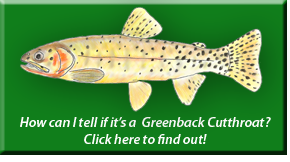 Greenback Cutthroat Identification