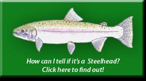 Steelhead Identification