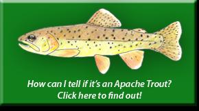 Apache ID