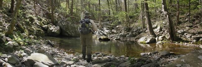 A stream in Shenandoah