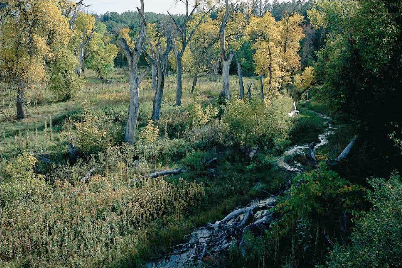 Upper Bordeaux Creek NE