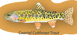 Coastal Cutthroat