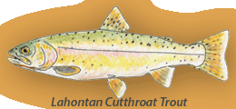 Lahontan Cutthroat