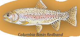 Columbia River Redband