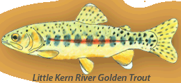 Little Kern River Golden
